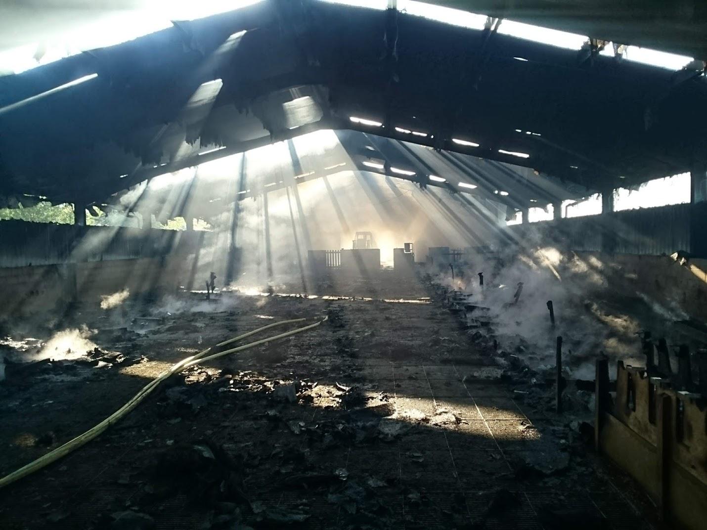 Mueren 120 corderos en un incendio en Errezil