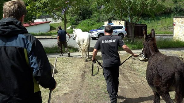 La Diputación de Bizkaia retira otras 28 cabezas de ganado de cuatro propietarios que utilizaban sin autorización pastos en La Arboleda