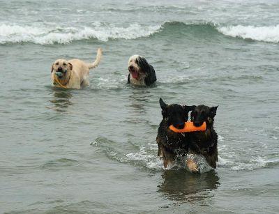 Cuatro personas sancionadas en San Sebastián por bajar con perros a la playa